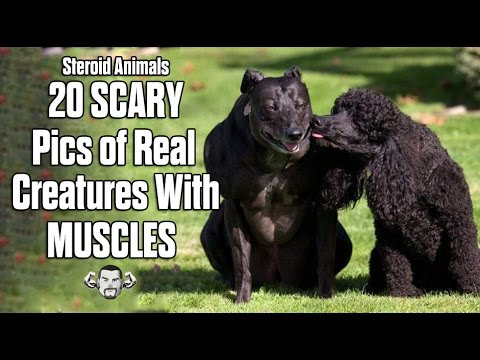 Steroid Animals | www.pixshark.com - Images Galleries With ...