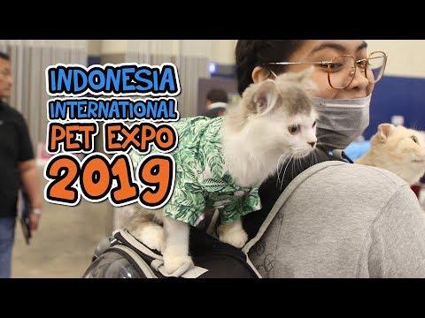 indonesia-international-pet-expo-2019-di-ice-bsd-city