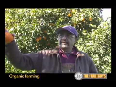 Organic Farming with Blue Heron  Farm in California