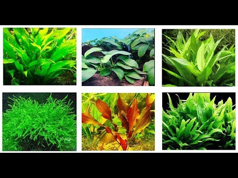 Best Aquarium Plants For Betta Fish