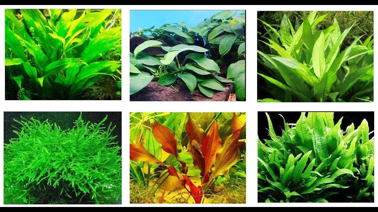 best aquarium plants for betta fish youtube