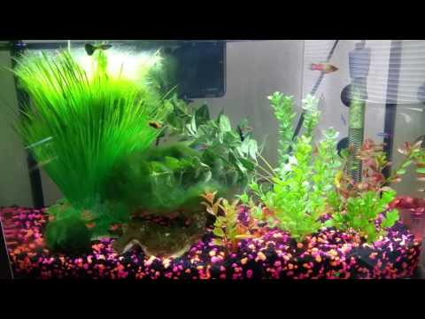 How To Keep A Betta With Guppies