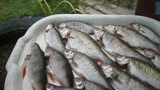 Після риболовлі. Спіймала рибку, а далі ЩО?