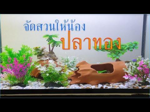 จัดตู้ปลาทองง่ายๆdiy By ดาด้าตู้ปลาสวยงามปลาทอง