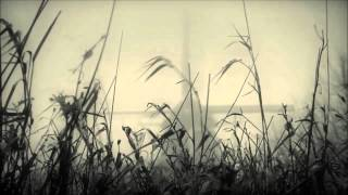 A Produce - The Golden Needle