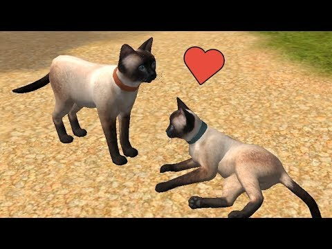 Кот симулятор мультфильм