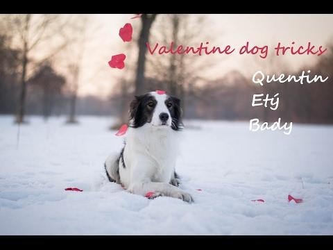 Valentine dog tricks -  Quentin&Etý&Bady