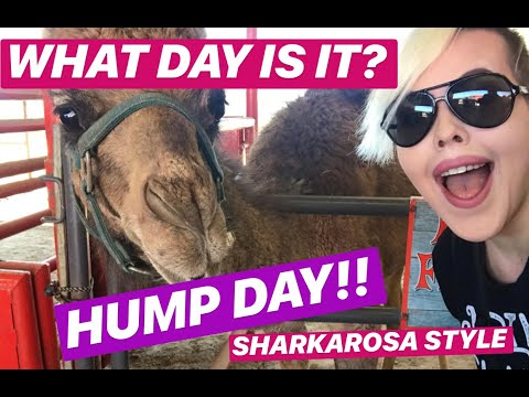 WHAT DAY IS IT... HUMP DAY!!  Sharkarosa Style!