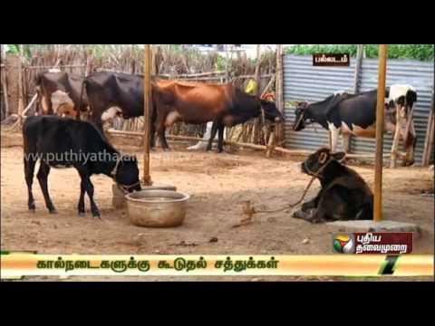 Pasumai Neram - Velladu Valarpu (Goat rearing) | Doovi