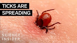 Why Ticks Are So Hard To Kill
