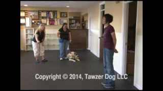 Preparing Dogs For Competition - Pamela Johnson