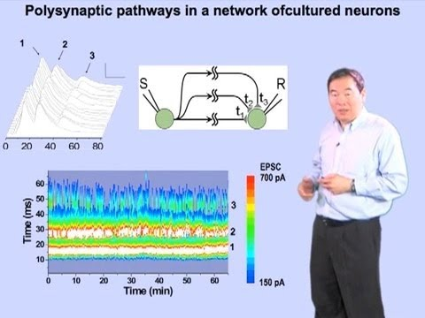 Mu-ming Poo (UC Berkeley, CAS Shanghai) Part 4: How Neural Circuits Learn Time Intervals