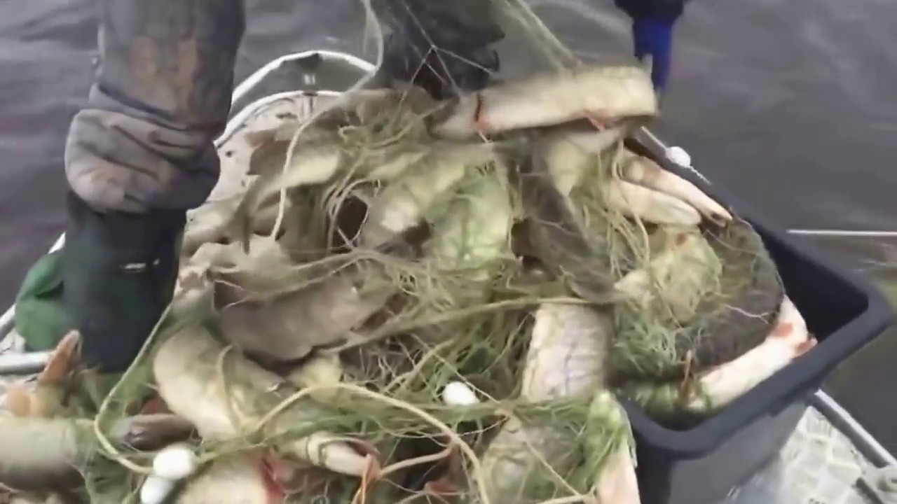 рыболовная снасть для ловли толстолоба