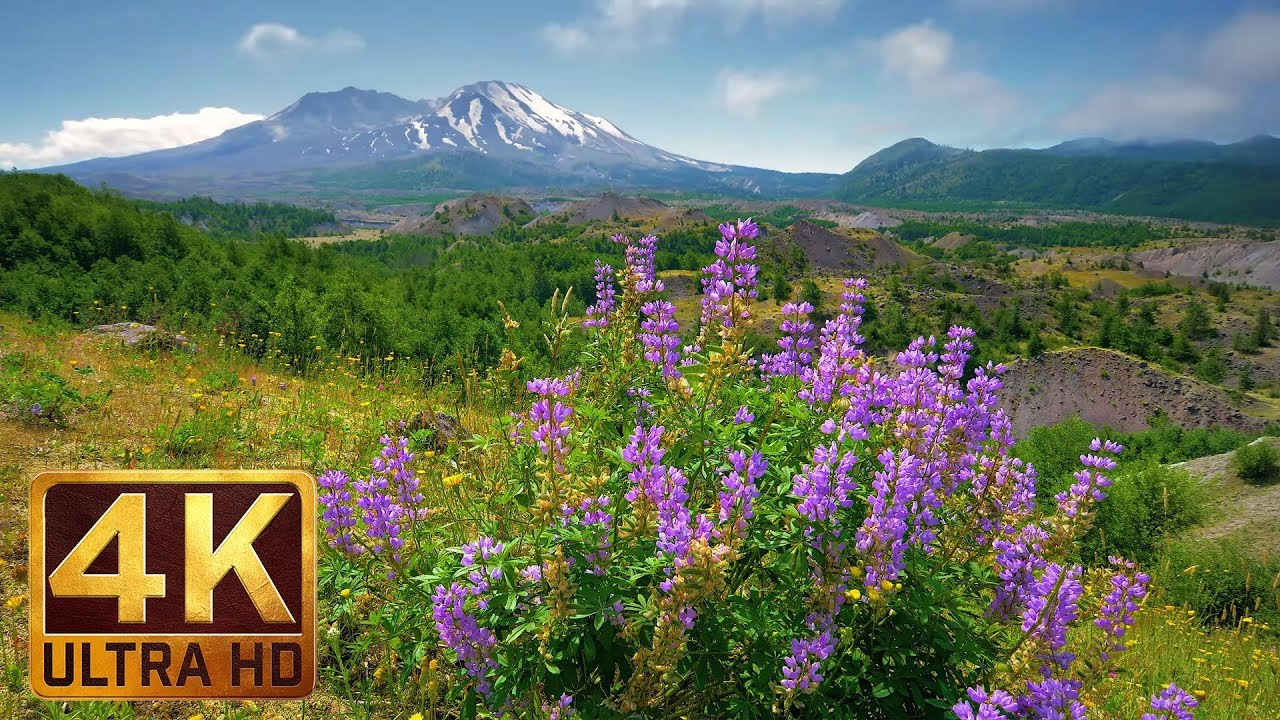 4K Nature Video   3 Hours of Flowers  Mountains and Birds Sounds     4K Nature Video   3 Hours of Flowers  Mountains and Birds Sounds   Hummocks  Trail  Mt  St  Helens