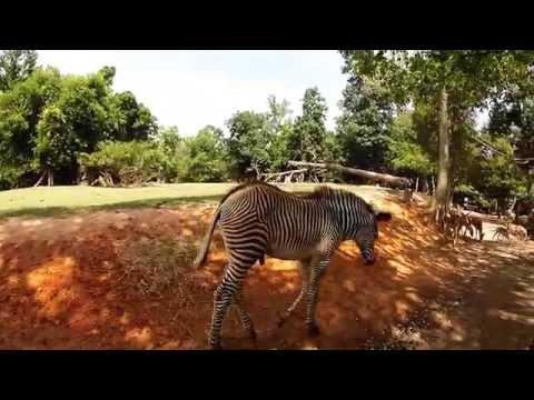 Go Pro: African Safari