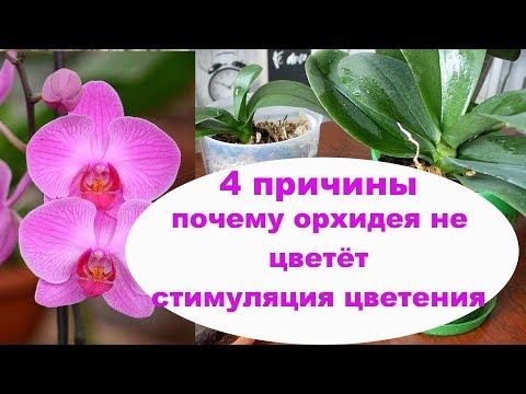 4 ПРИЧИНЫ ПОЧЕМУ НЕ ЦВЕТЁТ ОРХИДЕЯ как Заставить цвести Орхидею СТИМУЛЯЦИЯ цветения