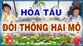 ĐỒI THÔNG HAI MỘ - Hòa tấu BOLERO Nhạc sống - PHONG BẢO Official