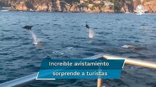 Turistas pudieron apreciar una inusual estampa de mantarrayas volando en playas de Acapulco