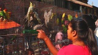 Galiff Street Bird Market, Kolkata
