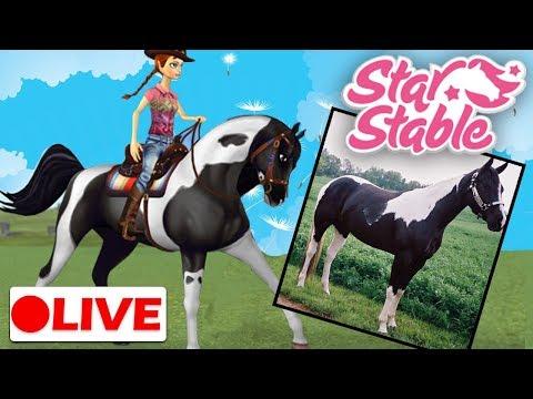 🔴 Star StableLive Stream   Training My Pinto Arabian