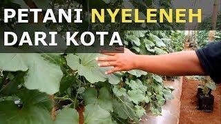 Petani Nyeleneh dari Kota: Kisah Sukses Petani dengan Metode Greenhouse MP3