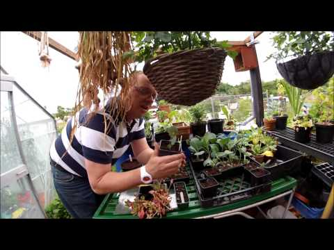Torquay Allotments 'My Plot' EP23 18/6/14
