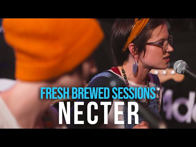 Fresh Brewed Sessions | Necter | WOE
