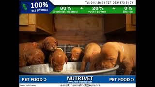 Funny dogs & NUTRIVET zdrava hrana za pse i mačke (17)