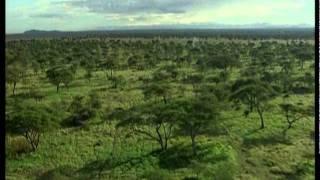 Дикая Африка 2. Русский трейлер