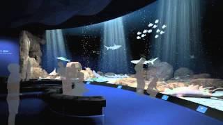 Ocean Wonders: Sharks! Animation