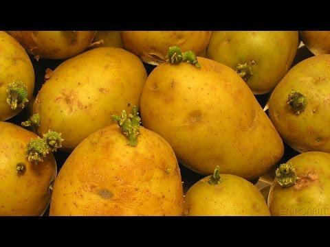 Sprouting Potato - Timelapse