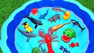Learn Colors With Wild Zoo Animals In Blue Water With Shark Toys For Kids