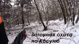 Коллективная охота на Косулю и вечерняя охота на утку/roe deer hunting and evening duck hunting