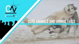 ▶ CUTE ANIMALS AND FUNNY ANIMAL FAILS 2019  (CUTENESS OVERDOSE)