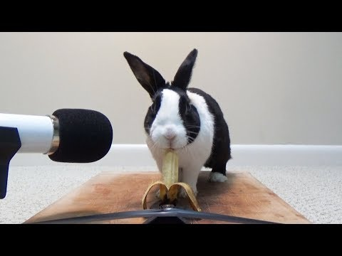 Rabbit eating baby banana ASMR