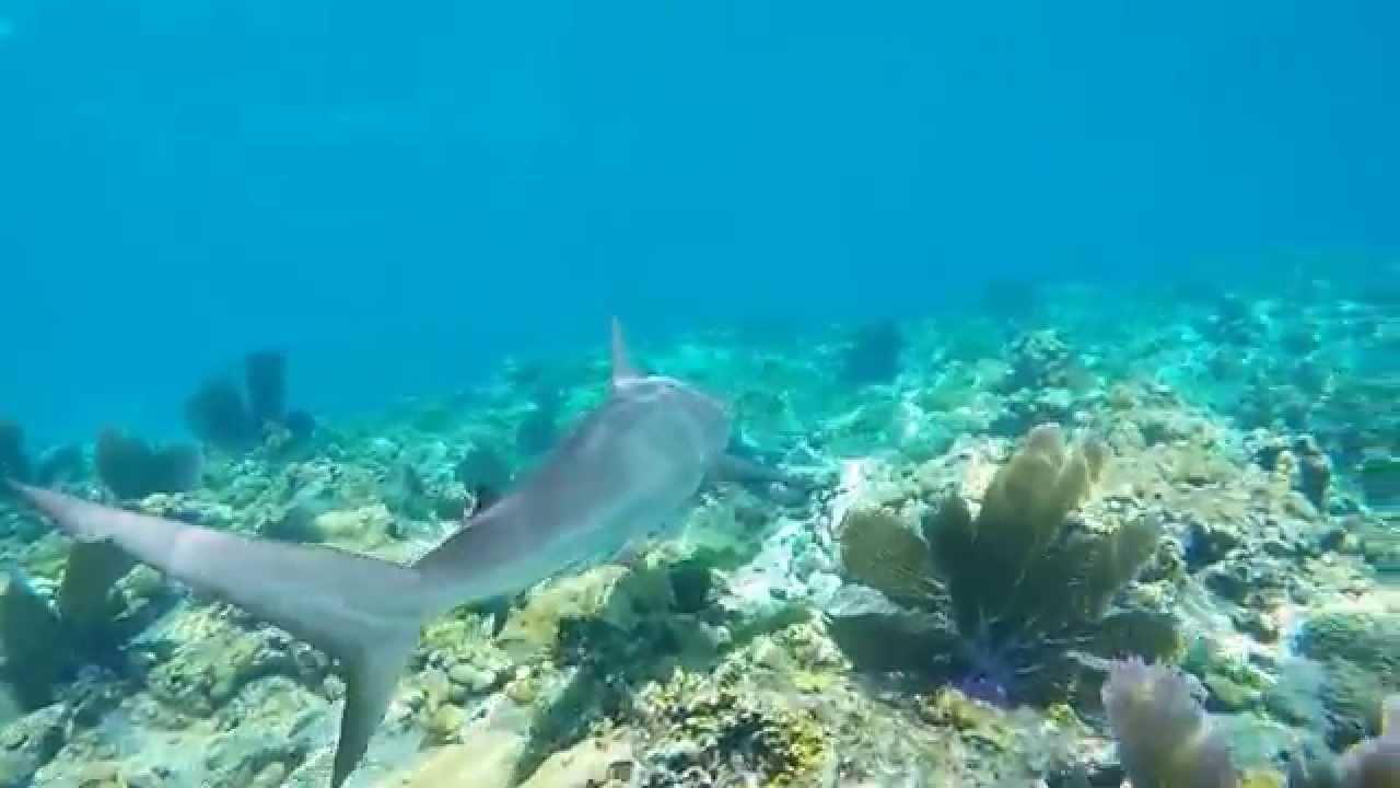 Sharks!! GoPro Hero 4 Black Snorkeling Slo-mo In The