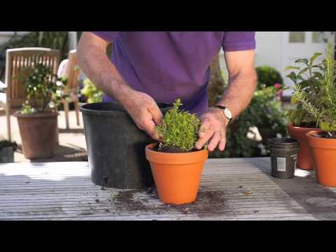 How To Grow Fresh Herbs