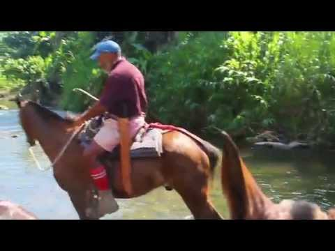 Horseback riding to the River of Carbon, Talamanca, Costa Rica
