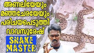 Vava Suresh Catching Russell's Viper & Rat Snake | Snake Mas…