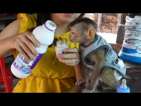 Wow Look At Mouth! Monkey Donal Surprise To Dutch Mill