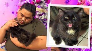 I LOST MY 2ND CAT (MAY CAT VIRUS DAW SA BAHAY) | LC VLOGS #228