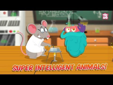Super Intelligent Animals   The Dr. Binocs Show   Best Learning Videos For Kids   Peekaboo Kidz