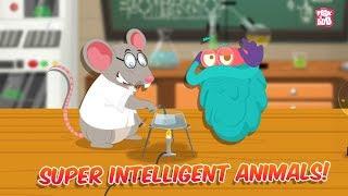 Super Intelligent Animals | The Dr. Binocs Show | Best Learning Videos For Kids | Peekaboo Kidz