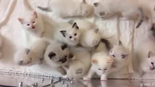 Смешные Коты и Собаки 2019 - Лучшие Приколы с Животными #145