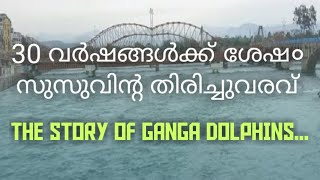 Ganga Dolphins and its importance in the time of Lockdown.