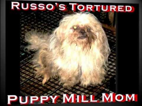 RUSSO\'S PET EXPERIENCE FASHION ISLAND - Newport Beach Pet Store ...