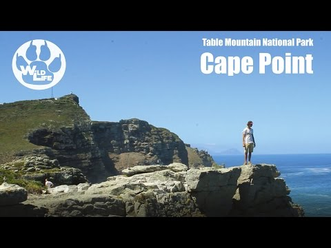 Cape Point | Table Mountain National Park - the WildLife