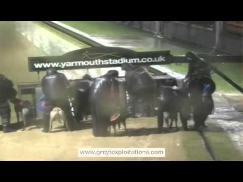 Greyhound abuse at Yarmouth