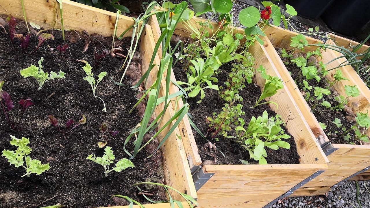 Gärtnern auf kleinstem Raum - 3: Erste Ernte, zweite Bepflanzung