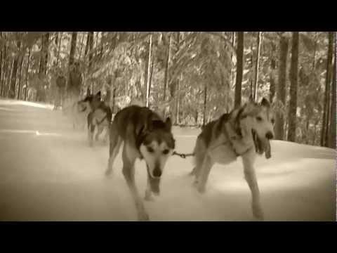 Siberian Husky: Informationen zur Rasse